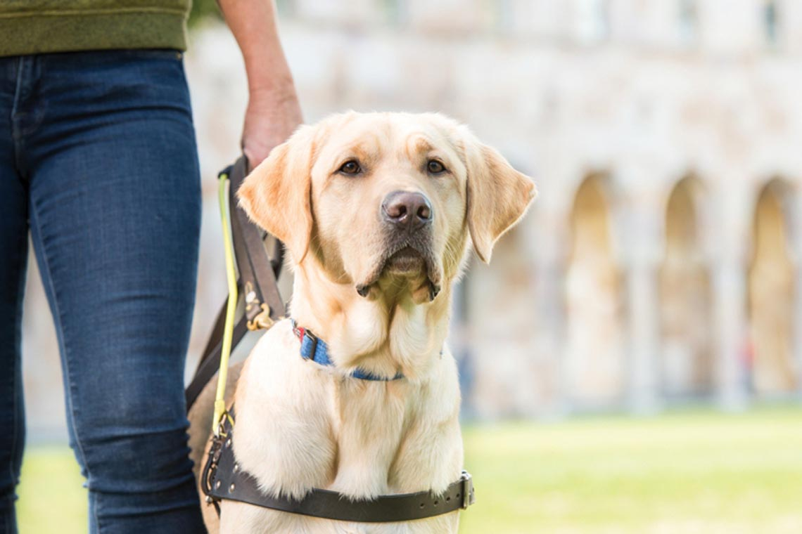 Transpot Assistance Dogs